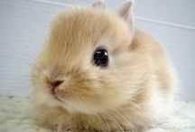 Innocence / Innocence ,,,,,,,,,sweetness .........:)