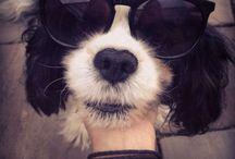 Charlie / My dog