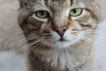 ! * I love them all * ! / A collection of cats to love & admire ! / by ~* Julia *~