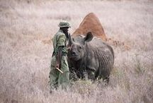 Wildlife News / Latest news and updates from wildlife conservation, to events and breaking stories.