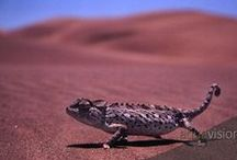 Reptiles and amphibians / Scaly and slimy reptiles and amphibians from around the world.