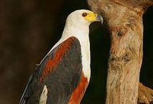 Wild Birds / Breathtaking birds from around the world.