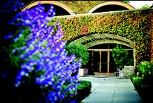 Escape to Napa / Experience the ultimate food and wine experience in Napa Valley.  / by ChandonUSA