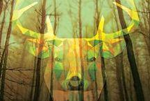 Posters: Animais / Posters da Moldurapop na categoria Animais (www.moldurapop.com)