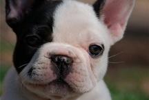 cutie dogs //