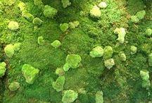 Musgogreen / Jardines verticales de interior. Con plantas preservadas, musgos, líquenes, Artículos de decoración vegetal...