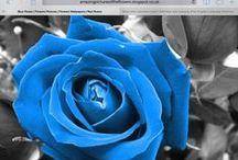 Blue / I love the colour blue.