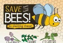 Pollinator Friendly Plants / by Alexandra Dickins