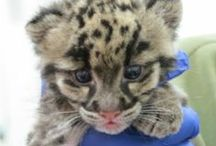Animals / There are some new babies at the Denver Zoo!  / by KOSI 101.1