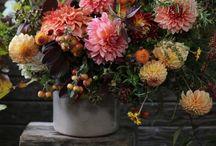 Flowers / Flowers, roses etc...