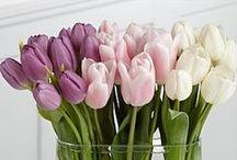 Frô / Apenas tulipas... o resto é apenas o resto.