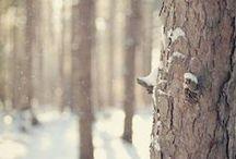Hiver / #picture #winter #hiver