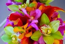 Orchid Tropical Wedding / Ideas for a tropical orchid themed wedding.