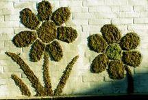Mosgraffiti / Regelmatig moeten scholen graffiti van de muren verwijderen. Voorkom dit door de graffitifanaten voor te blijven en zelf de muren te versieren met…mosgraffiti! Hoe je het doet lees je hier: www.biologieplusschool.nl/nieuws/doen/mosgraffiti