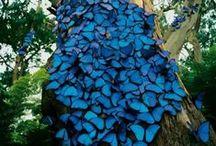 Beautiful Blues