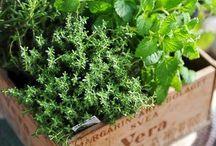 Puutarha / garden / Täältä löytyy erilaisia ideoita pihalle ja puutarhaan