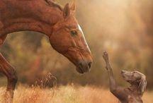 Top 2 / Cavalos e cães