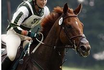 Horses Competing / by Lauren Nimmons