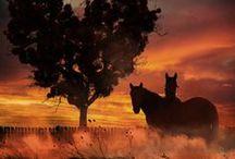Hats n Horses / My love! / by Kaila