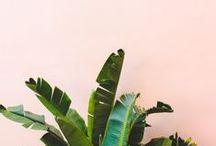 peachy green