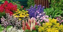 GARDENIA / *Bahçe Tasarımı - Garden Planning