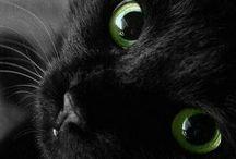 Koty / Koty kotki kiciusie