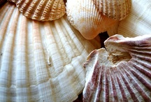 shells and other beach finds