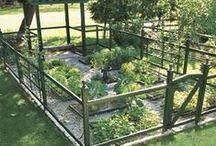 Gardens: Vegetables/Fruits