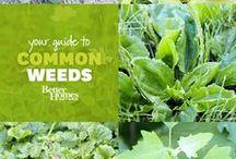 Garden: Tips & Tricks
