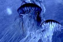 Cor de Azul