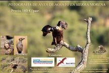 Actividades / Todas las actividades y cursos de Alpasín están pensados para ti, para que disfrutes aprendiendo de las  maravillas que ofrece Sierra Morena. ¡Ven a descubrirlas! Te esperamos...