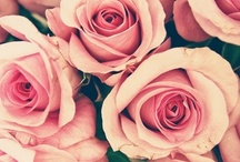 flower / pretty flowers