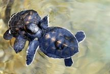 Turtles / by Natalie Ott