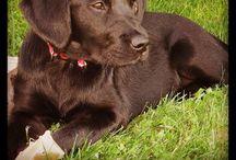 Dogz / Människans bästa vän, min bästa kompis, Zingha