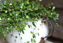 Verde de mis amores / La belleza de las plantas