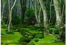 Moss and Ferns