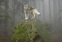 Wolf spirit / Stacy & Thanasis ,*)