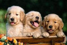 Puppies and Dogs