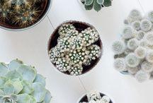Plants | Home