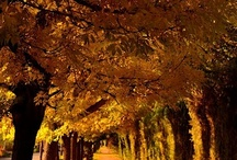 Mendoza, mi tierra... / Fotos