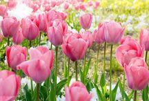 Flowers / Pretty Flowers / by Macononch☆ I