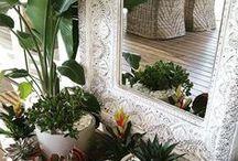 ZEN indoor : plants