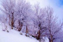 Winter Wonerland