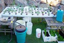 hydroponic / topraksız tarım