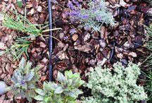 Fairy Garden / Minigrădini și nu numai