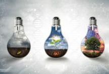 SIMPLY LIGHT BULBS / by Elena Spirina