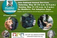 2015 Maddie's Adoption Days / Join Oakland Animal Services on Saturday, May 30 (10 a.m. to 6 p.m.) and Sunday, May 31 (10 a.m. to 5 p.m.) for Maddie's® Pet Adoption Days. Adoption fees are waived for cats, and dogs going to qualified homes. Oakland Animal Services is located at 1101 29th Ave, Oakland, CA, 94601. The dogs and cats shown here are just some of those looking for homes. Please visit our site, or go to the shelter to see/meet over 100 dogs/puppies and cats/kittens available for adoption. #ThanksToMaddie / by Oaklands Animals