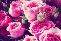 Pretty in Pinks & Roses
