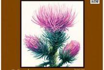 Strathmore Watercolour Paper / Strathmore Artist Papers Watercolour paper https://www.artistpapers.co.uk/