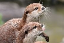 Animals / So much types of cute, adorables and sweet animals